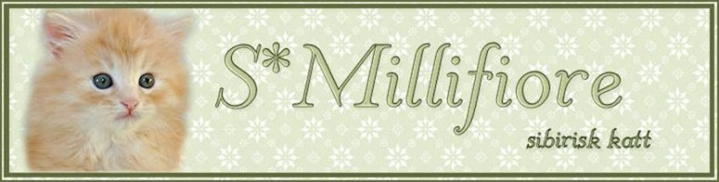 S*Millifiore Sibiriska katter
